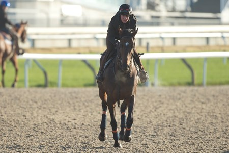 Protectionist - Woodbine, October 11, 2016