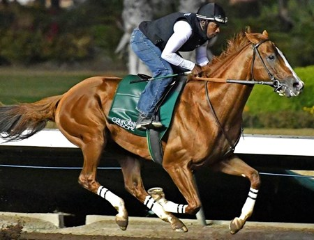 California Chrome - Los Alamitos, October 15, 2016