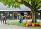 The Fasig-Tipton Saratoga October sale begins Oct. 16