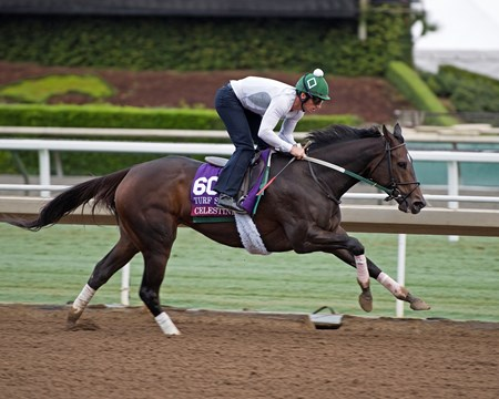 Celestine Works at Santa Anita in preparation for 2016 Breeders' Cup on Oct. 31, 2016, in Arcadia, CA.