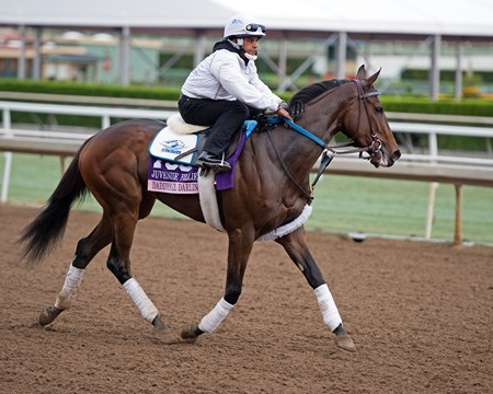 Daddys Lil Darling Works at Santa Anita in preparation for 2016 Breeders' Cup on Oct. 31, 2016, in Arcadia, CA.
