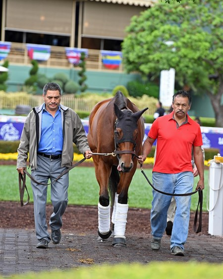 Beholder Schooling at Santa Anita. Works at Santa Anita in preparation for 2016 Breeders' Cup on Oct. 30, 2016, in Arcadia, CA.