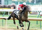 McCraken One to Beat in Kentucky Jockey Club