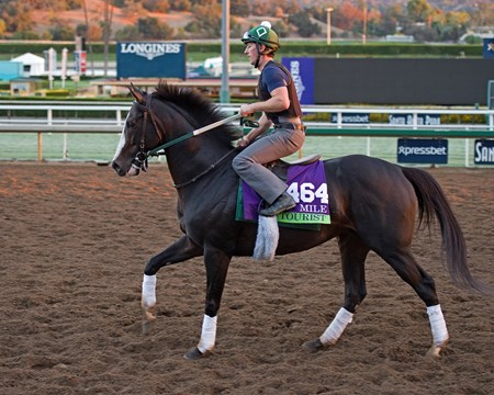Tourist, Mile Works at Santa Anita in preparation for 2016 Breeders' Cup on Oct. 29 2016, in Arcadia, CA.
