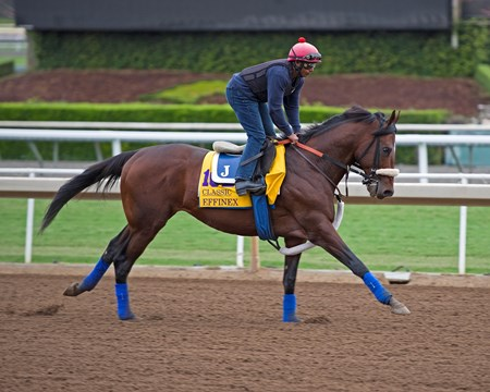 Effinex Works at Santa Anita in preparation for 2016 Breeders' Cup on Oct. 30, 2016, in Arcadia, CA.