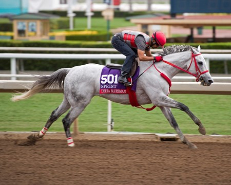 Delta Bluesman Works at Santa Anita in preparation for 2016 Breeders' Cup on Oct. 30, 2016, in Arcadia, CA.