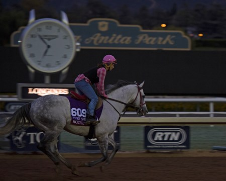 Holy Lute, Turf Sprint Works at Santa Anita in preparation for 2016 Breeders' Cup on Oct. 29 2016, in Arcadia, CA.