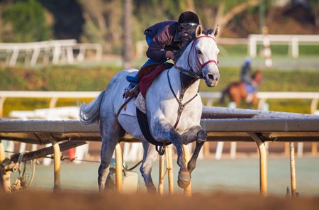 Holy Lute - Santa Anita, October 18, 2016