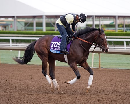 Term of Art Works at Santa Anita in preparation for 2016 Breeders' Cup on Oct. 31, 2016, in Arcadia, CA.