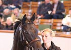 Lot 427, a colt by Dubawi, brought 2,600,000gns (US$3,444,170) to top the sale.