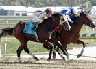 Greatbullsoffire won the Maryland Million Nursery Stakes in late October