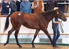 Tattersalls October sells a Dubawi--Fallen For You colt (Lot 39) for 2.6 million guineas on opening day