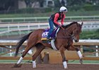 Beholder Works at Santa Anita in preparation for 2016 Breeders' Cup on Oct. 31, 2016, in Arcadia, CA.