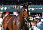 Baffert Duo Awaits A. P. Indian in Sprint