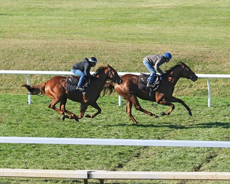 Acapulco (Inside) - Undrafted (Outside) - Work - Keeneland - 10-23-16