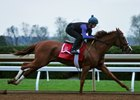 Catch a Glimpse Breezes for Breeders' Cup