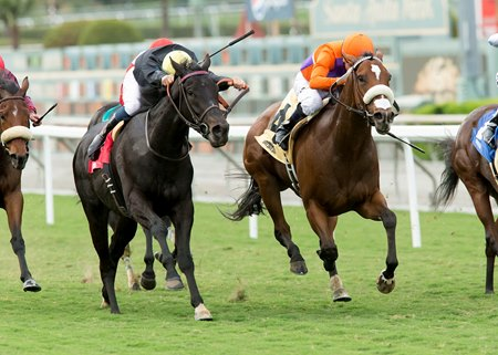 Cover Song, right, outduels favored Danilovna in the Autumn Miss Stakes