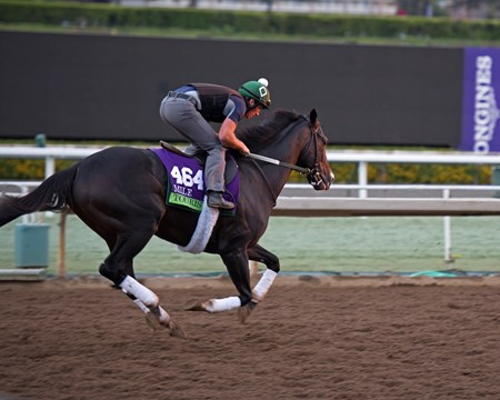 Tourist, Mile. Works at Santa Anita in preparation for 2016 Breeders' Cup on Oct. 29 2016, in Arcadia, CA.