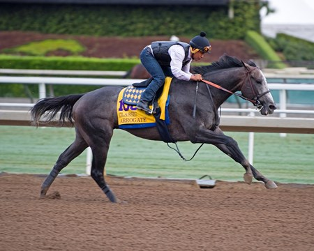 Arrogate Works at Santa Anita in preparation for 2016 Breeders' Cup on Oct. 31, 2016, in Arcadia, CA.