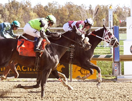 Who Stole My Sock wins the Maryland Million Starter Handicap at Laurel Park.