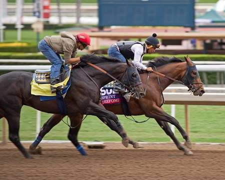 Drefong Works at Santa Anita in preparation for 2016 Breeders' Cup on Oct. 30, 2016, in Arcadia, CA.