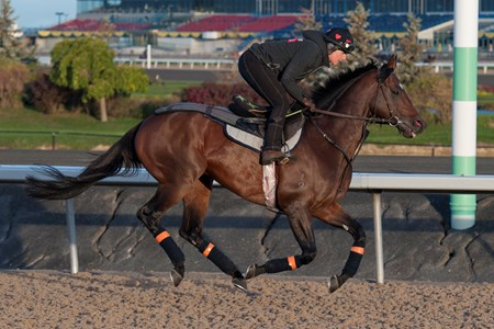 Protectionist  - Woodbine, October 13, 2016