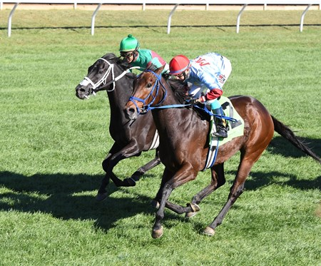 Mongolian Saturday wins the 2016 Woodford Stakes
