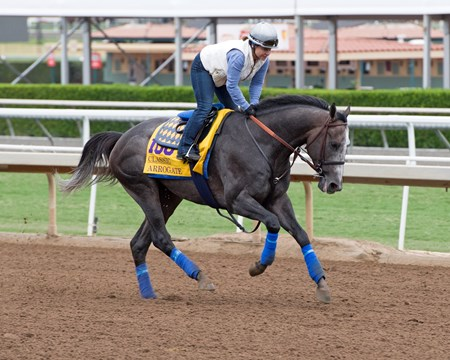 Arrogate Works at Santa Anita in preparation for 2016 Breeders' Cup on Oct. 30, 2016, in Arcadia, CA.