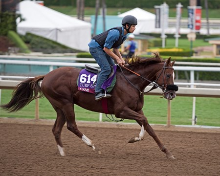 Om Works at Santa Anita in preparation for 2016 Breeders' Cup on Oct. 30, 2016, in Arcadia, CA.