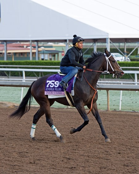 Union Strike, Juvenile Fillies