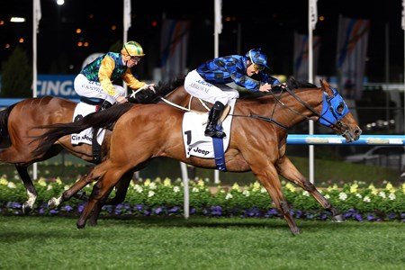 Champ 8 year old Buffering winning the Group 1 Moir Stakes 1000 metres at Moonee Valley in Australia on October 2, 2015. 