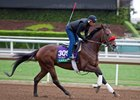 Ralis trains ahead of the 2016 Breeders' Cup at Santa Anita Park