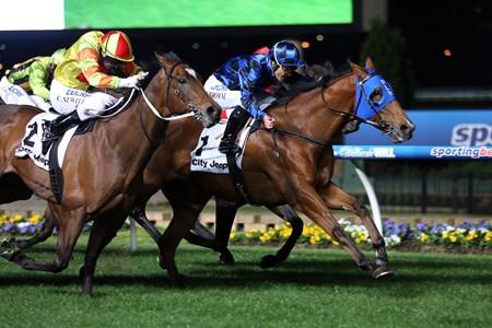 Buffering was too strong for Lankan Rupee, the world's top-rated sprinter, Sept. 23, 2014 as he led nearly every step at Moonee Valley and denied that opponent victory by a short head in the City Jeep Moir Stakes (Aus-I).