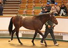 Dubawi Tops Again at Tattersalls