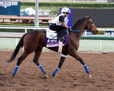 Daddys Lil Darling, Juvenile Fillies Works at Santa Anita in preparation for 2016 Breeders' Cup on Oct. 29 2016, in Arcadia, CA.