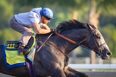Arrogate works at Santa Anita Oct. 18 under Rafael Bejarano
