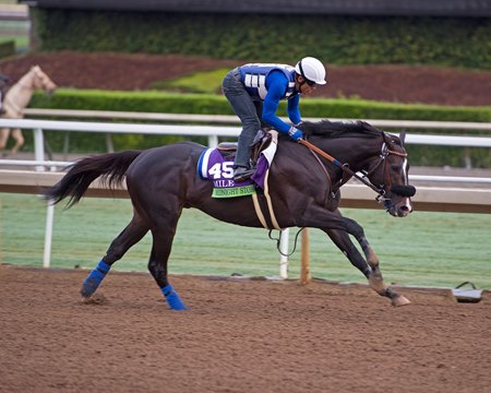 Midnight Storm switches back to dirt after a third on turf in the Breeders' Cup Mile