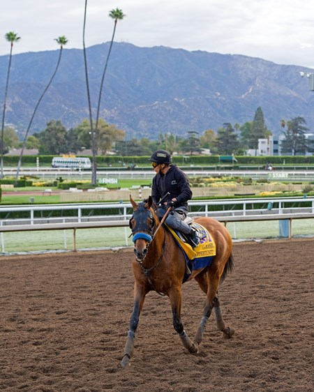 Hoppertunity, Classic. Works at Santa Anita in preparation for 2016 Breeders' Cup on Oct. 29 2016, in Arcadia, CA.