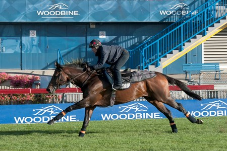 Protectionist - Woodbine, October 14, 2016