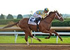 Noble Bird Brings Form Into Clark Handicap