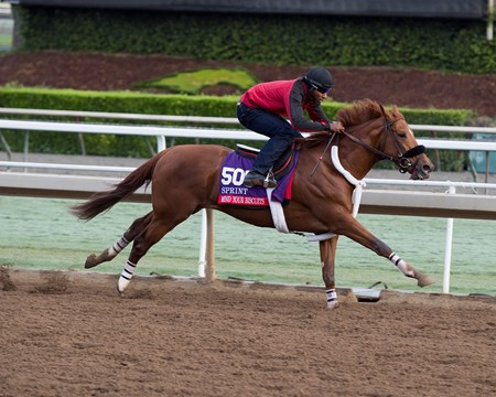 Mind Your Biscuits, Sprint Works at Santa Anita in preparation for 2016 Breeders' Cup on Oct. 29 2016, in Arcadia, CA.