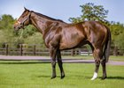 Dariyan is a son of Shamardal, who has sired 8% black-type stakes winner to date.