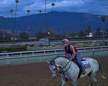 Holy Lute Works at Santa Anita in preparation for 2016 Breeders' Cup on Oct. 29 2016, in Arcadia, CA.