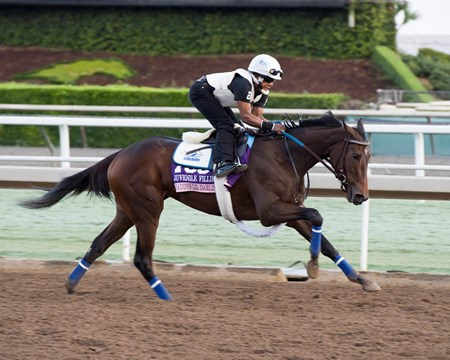 Daddys Lil Darling, Juvenile Fillies