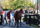 Yearling Sale Season Ends With F-T October