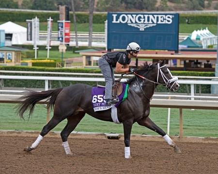 Tom's Ready, Dirt Mile. Works at Santa Anita in preparation for 2016 Breeders' Cup on Oct. 29 2016, in Arcadia, CA.
