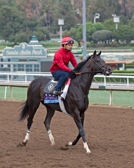 Not This Time, Juvenile. Works at Santa Anita in preparation for 2016 Breeders' Cup on Oct. 29 2016, in Arcadia, CA.