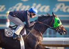 Melatonin, raised and sold by Denali Stud, prepares for the Nov. 5 Breeders' Cup Classic.