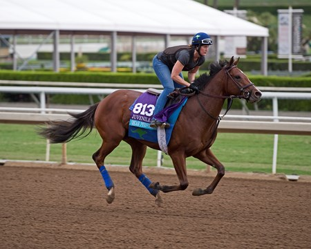 Oscar Performance Works at Santa Anita in preparation for 2016 Breeders' Cup on Oct. 30, 2016, in Arcadia, CA.