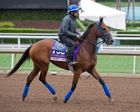 Jamyson'n Ginger Works at Santa Anita in preparation for 2016 Breeders' Cup on Oct. 30, 2016, in Arcadia, CA.